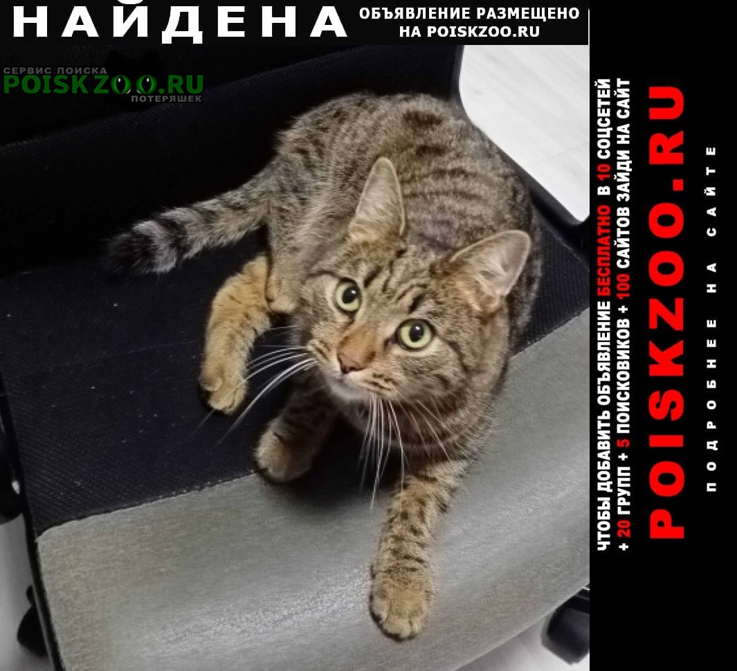 Найдена кошка камышевый окрас Екатеринбург