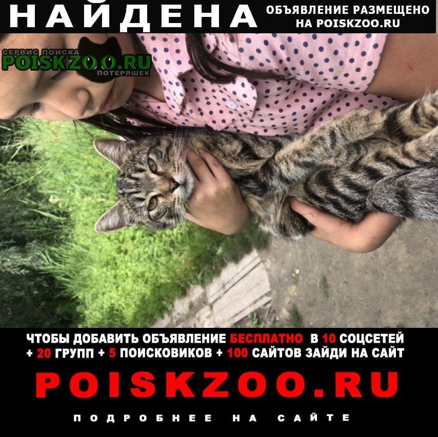 Найдена кошка кировский район Новосибирск
