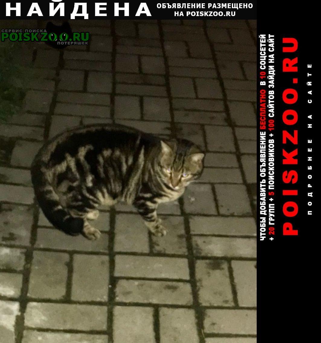 Найдена кошка кот живёт на улице, варшавская 6 корпус Санкт-Петербург