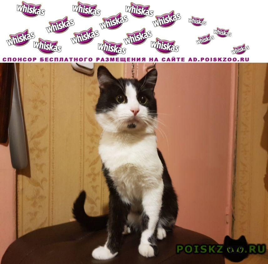 Найден кот чёрно-белый г.Москва