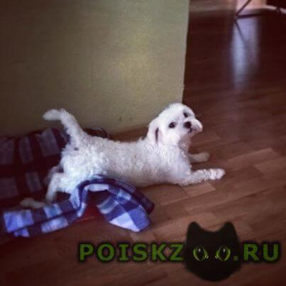 Найдена собака кобель г.Дмитров
