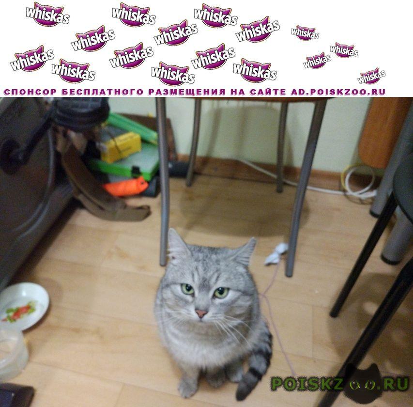 Найден кот в районе бурнаковки г.Нижний Новгород