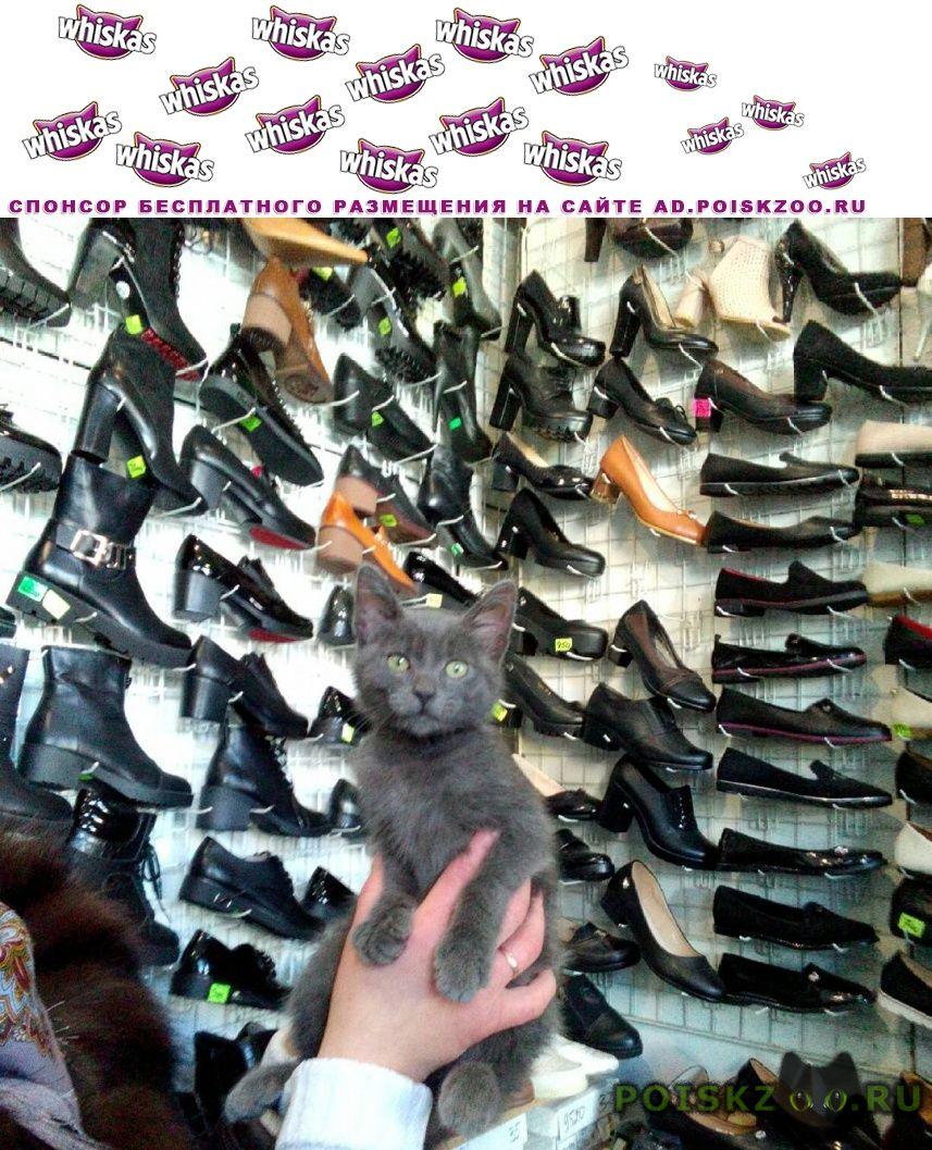 Найден кот ёнок. г.Михайловск Ставропольский край