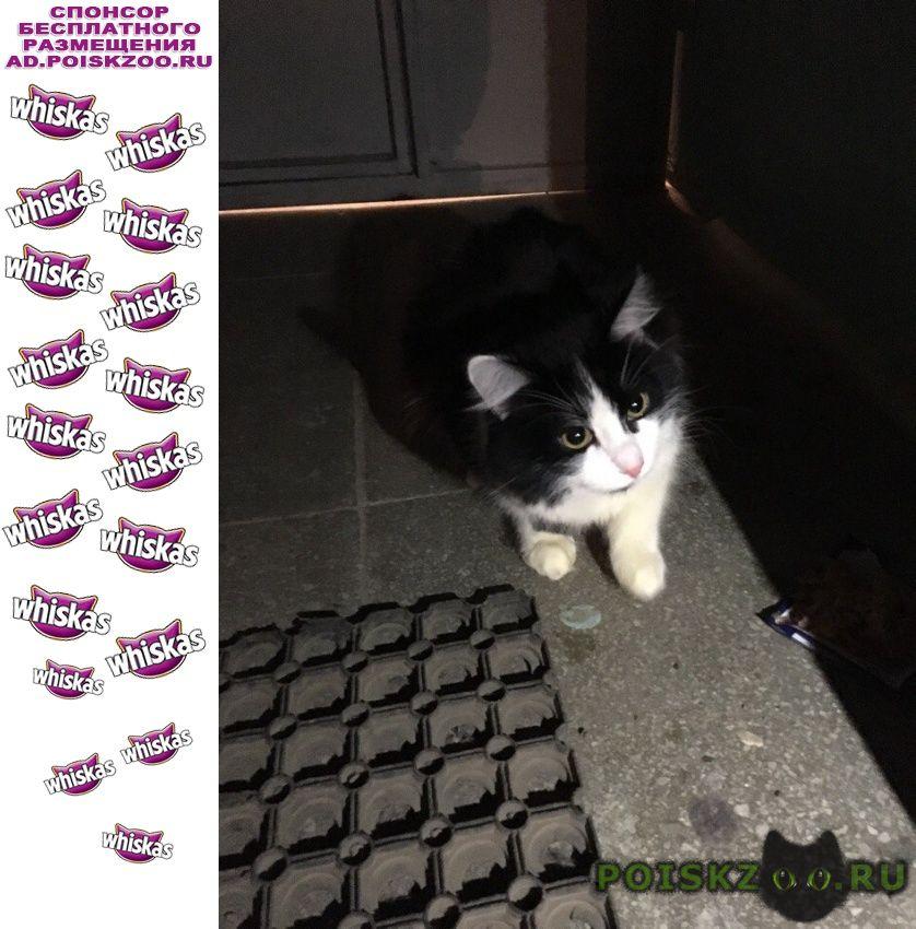 Найдена кошка или кот, черно-белая пушистая г.Екатеринбург