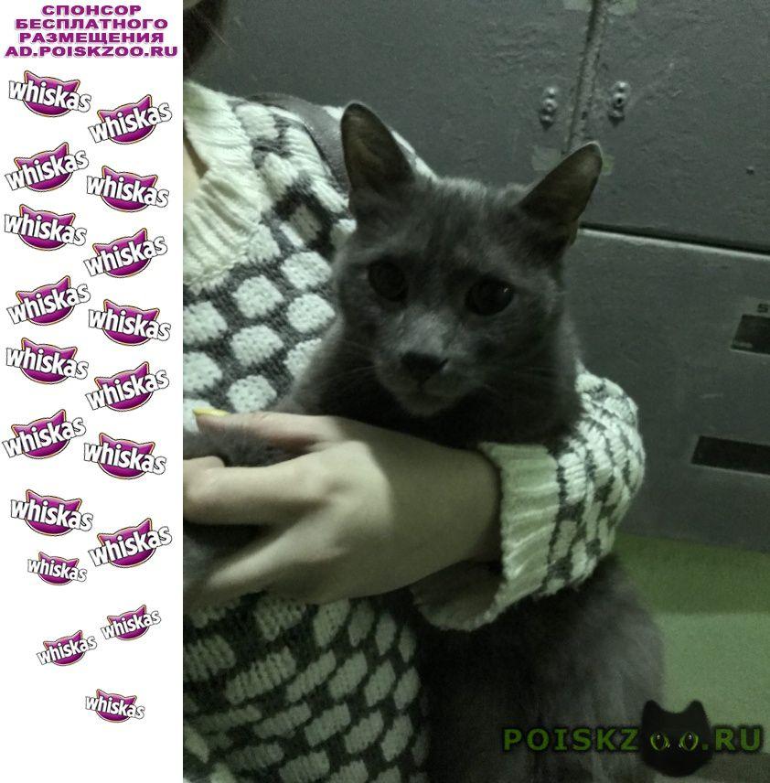 Найден кот породы русская голубая г.Москва