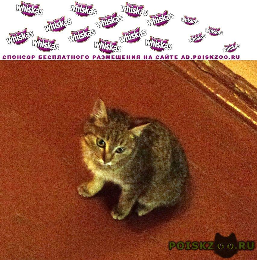 Найдена кошка г.Ангарск