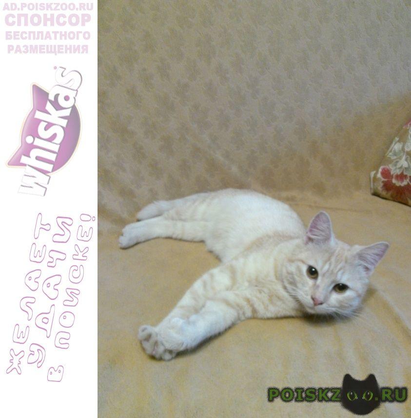 Найден кот г.Климовск