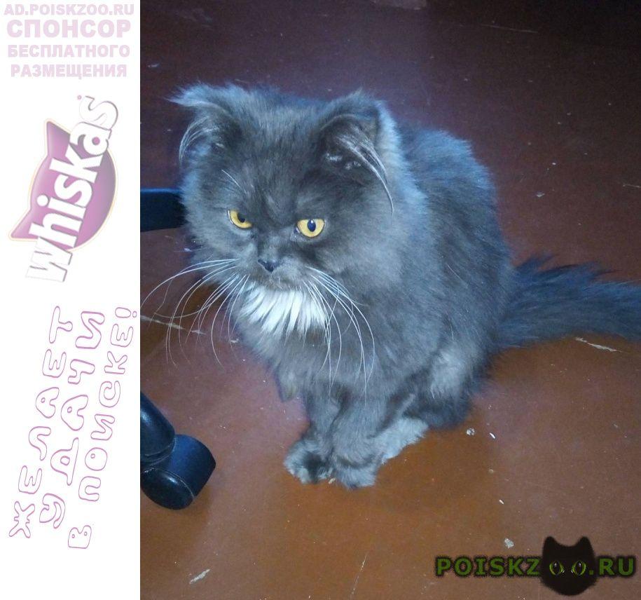 Найдена кошка Усолье-Сибирское (Иркутская обл.)