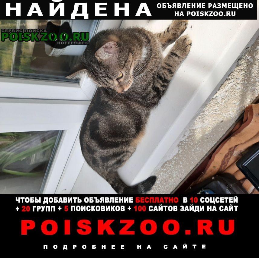 Найдена кошка Ангарск