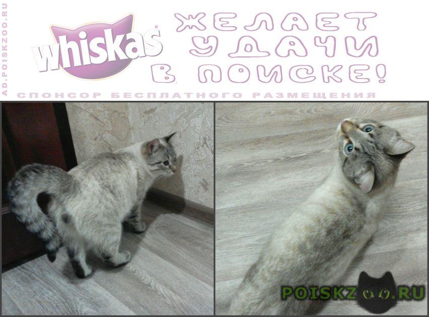Найден кот г.Киров (Кировская обл.)