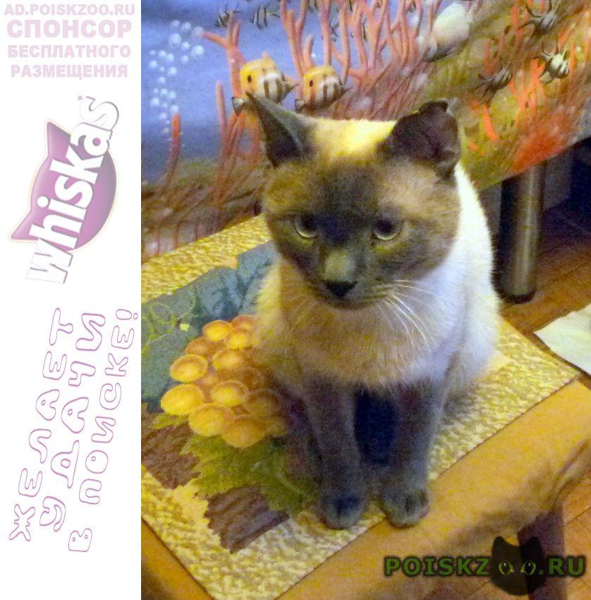 Найден кот молодой тайский г.Фирсановка