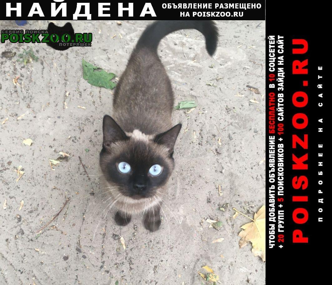 Найдена кошка Шахты