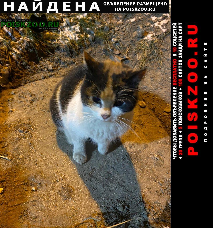 Найдена кошка помогите Санкт-Петербург
