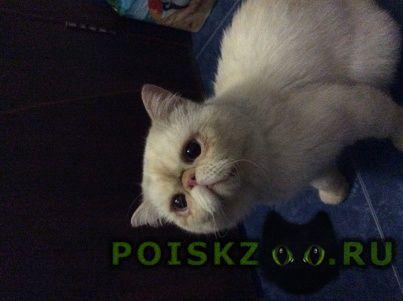 Найден кот донская 29 г.Сочи