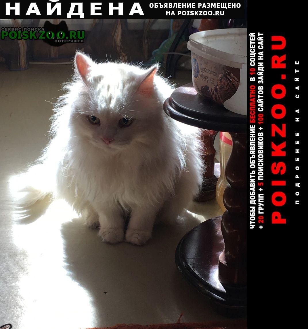 Найдена кошка в микрорайоне левобережный Химки