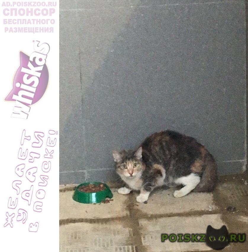 Найдена кошка или кот г.Апрелевка