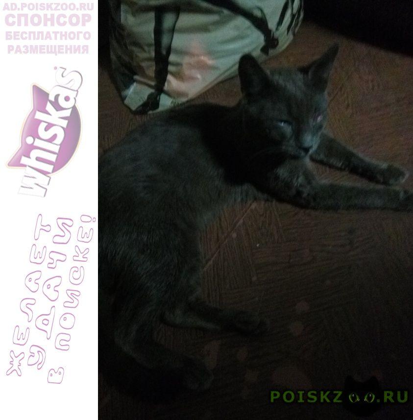 Найдена кошка г.Санкт-Петербург