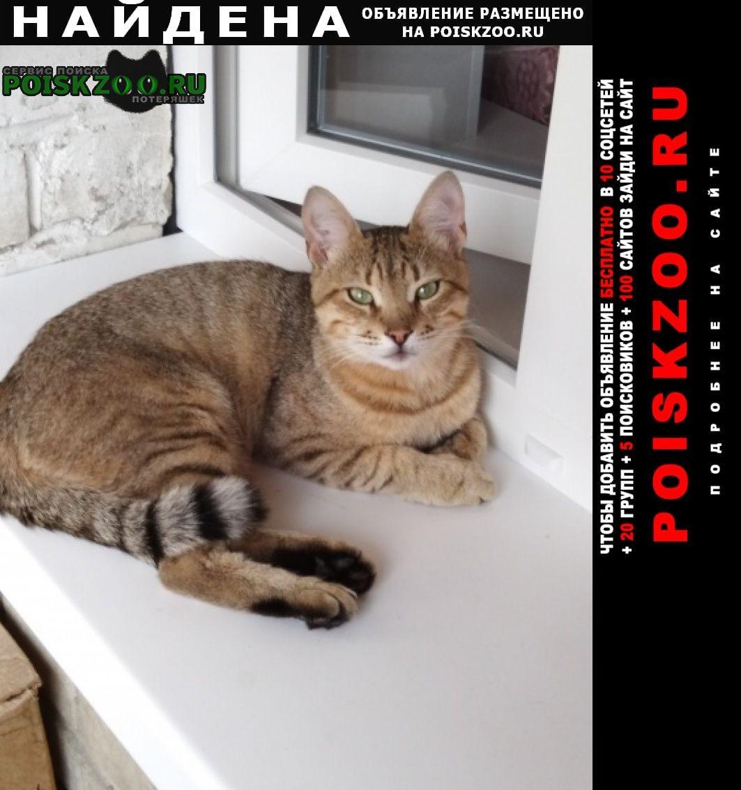 Найден кот в володарском р-не Брянск