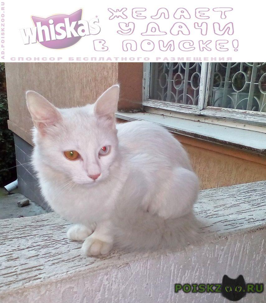 Найдена кошка молодая в центре г.Сочи