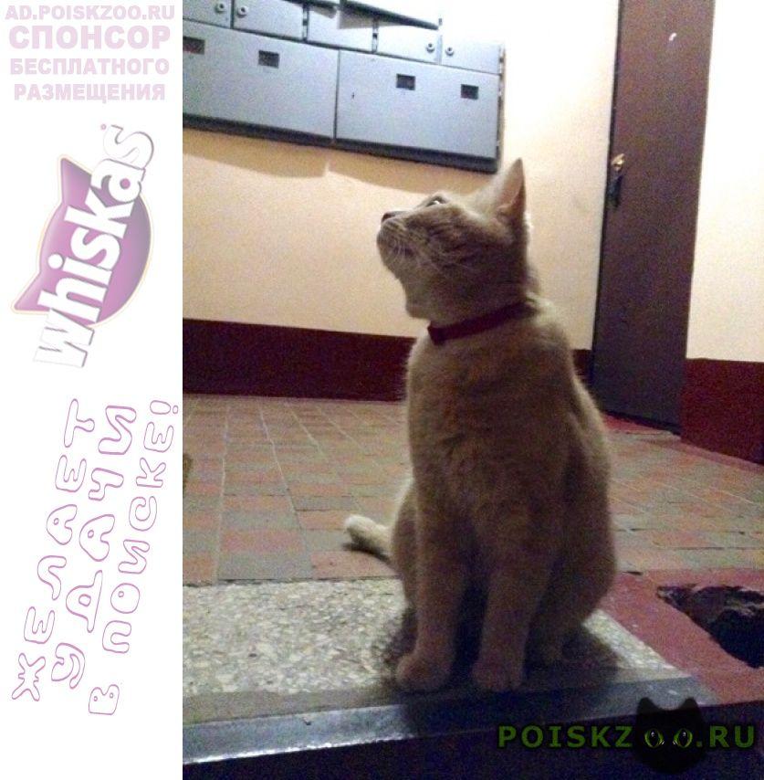Найдена кошка фили-давыдково, ул. кастанаевская 31 3 г.Москва