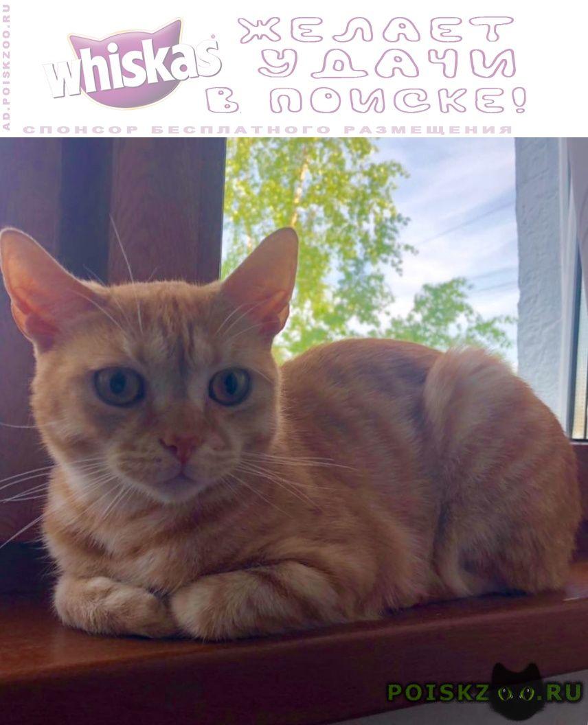 Найден кот молодой рыжий г.Москва