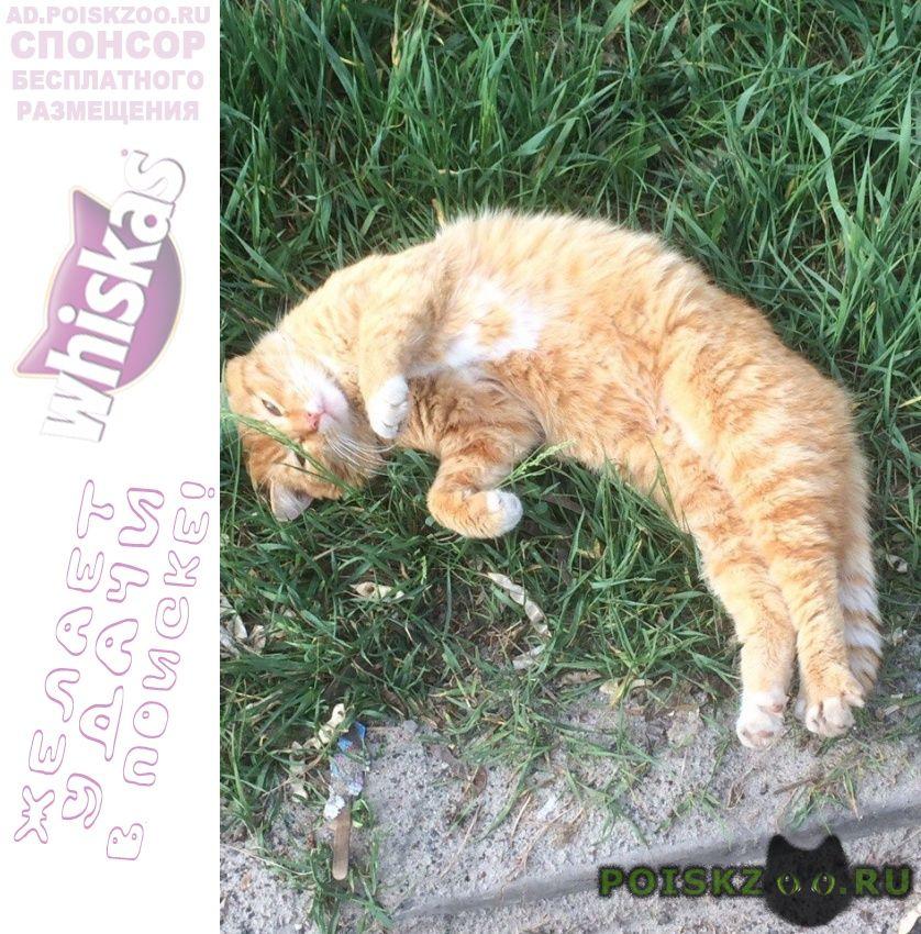 Найден кот красивый рыжий потеряшка г.Старый Оскол
