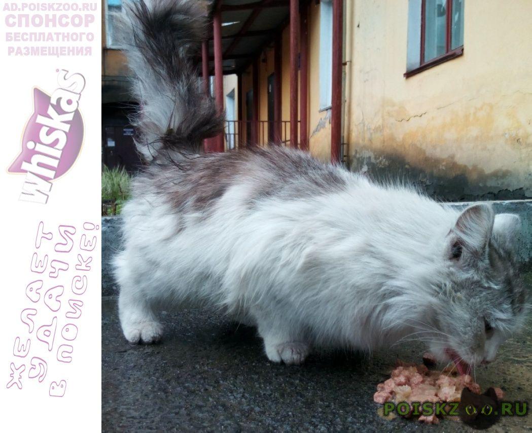 Найдена кошка котенок 6-8 месяцев длинношерстный г.Новокузнецк