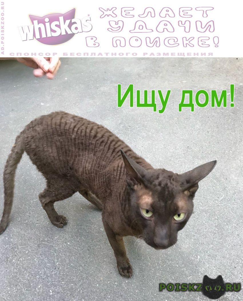 Найден кот корниш-рекс ищет хозяев г.Москва