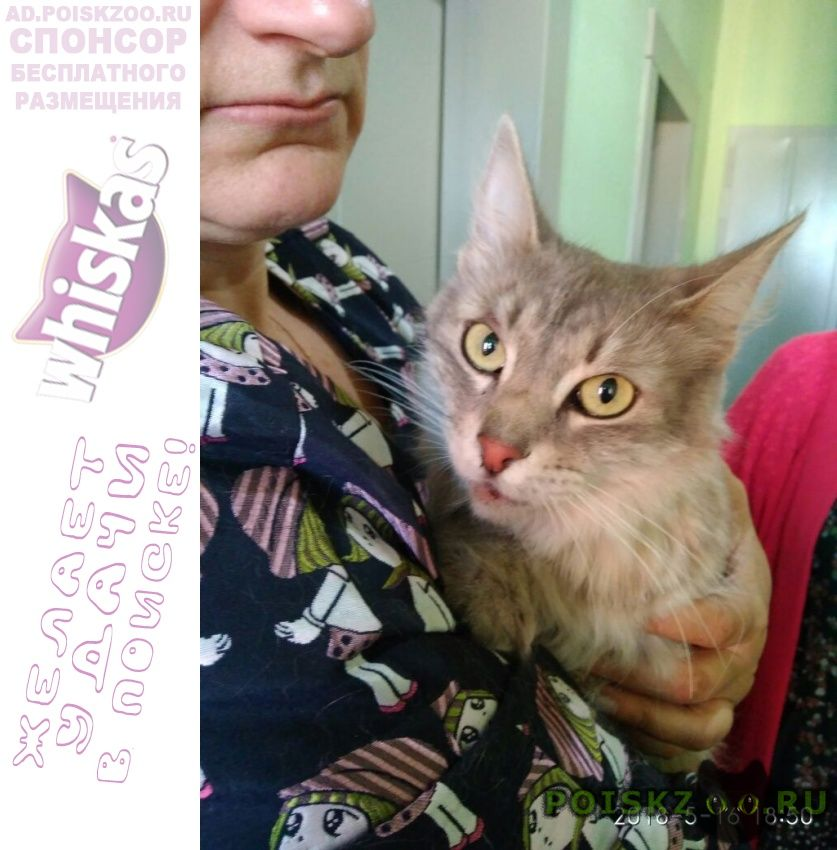 Найдена кошка очаково-матвеевское 16 мая г.Москва