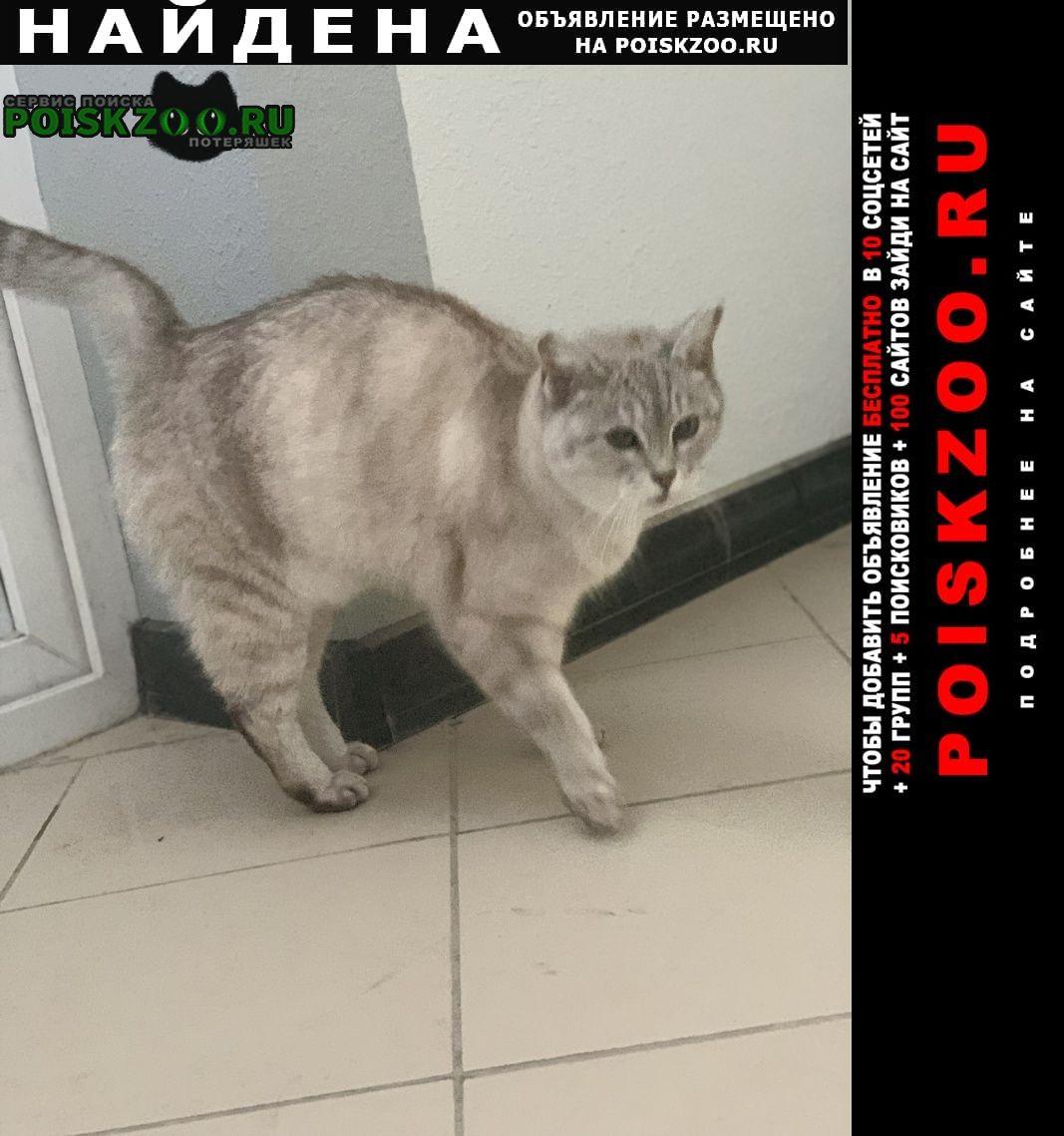 Найдена кошка Казань