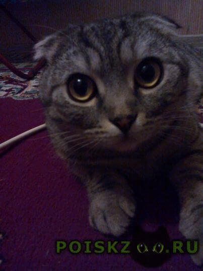 Найдена кошка гриша г.Саратов