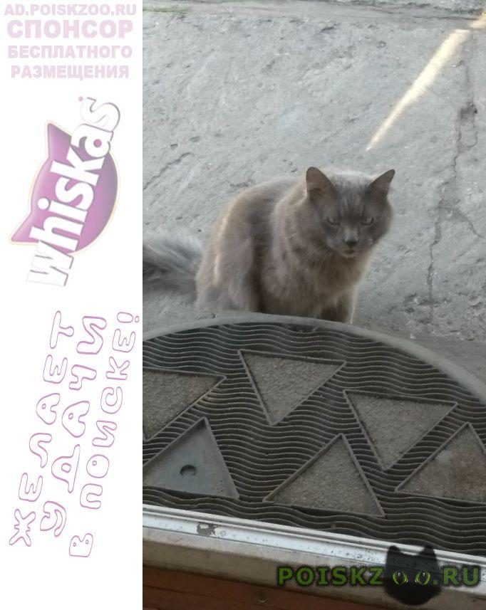 Найден кот т г.Москва