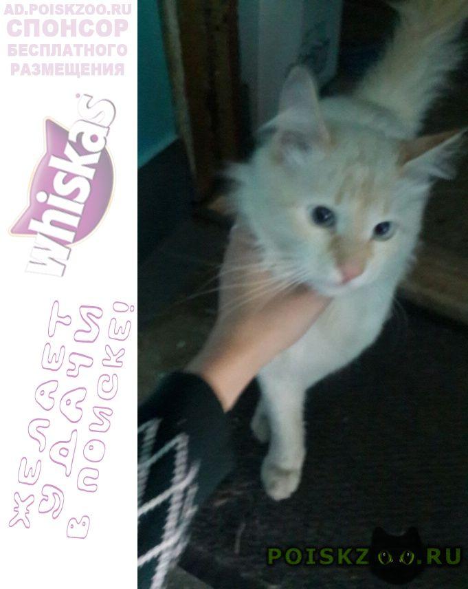 Найден кот  генерала тюленева 31 г.Москва