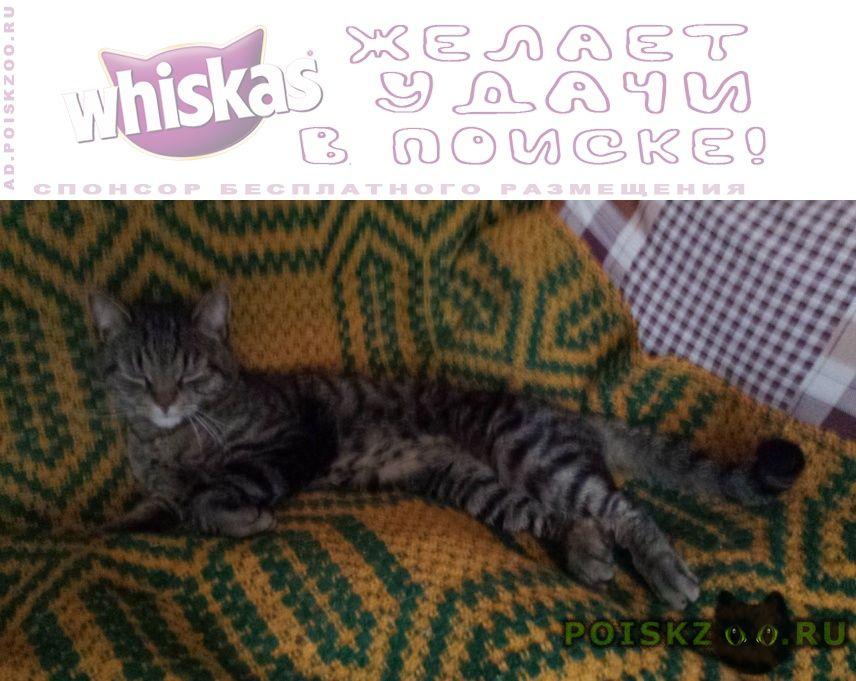 Найдена кошка тойгер г.Москва