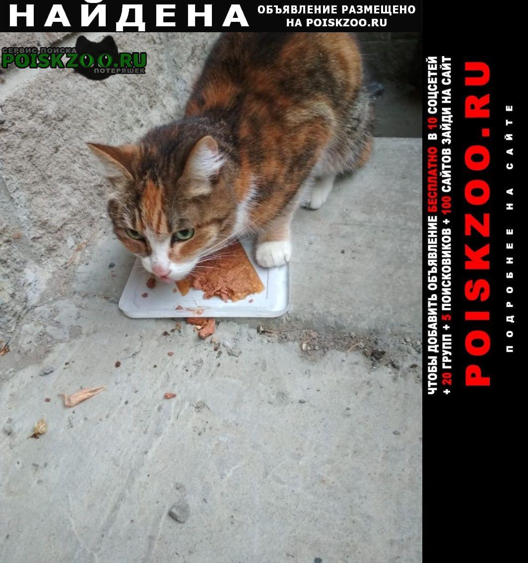 Найдена кошка Новоуральск (Свердловская обл.)