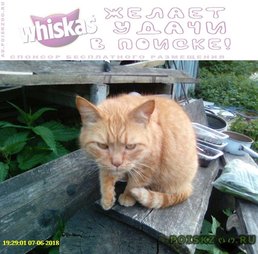 Найдена кошка рыжая британка г.Москва