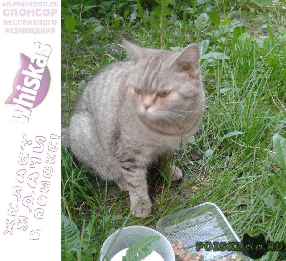 Найдена кошка красивая, серо-белая г.Новокузнецк