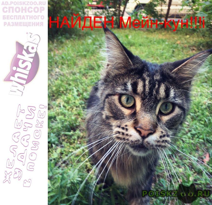 Найдена кошка мейн-кун г.Москва