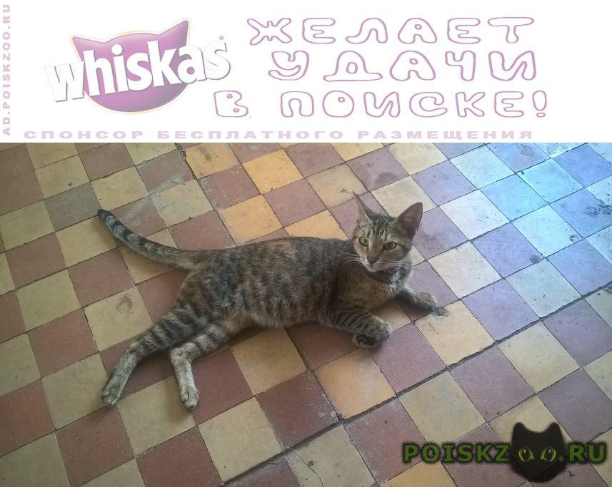 Найдена кошка.домашняя.ласковая. г.Москва