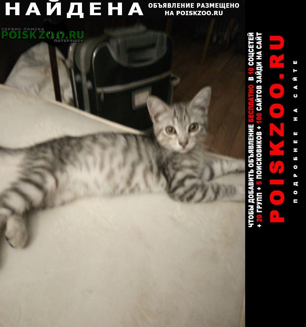 Найден котик серый полосатый 4 месяца Нижний Новгород