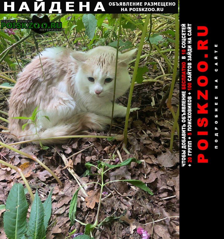 Найдена кошка или кот Красногорск