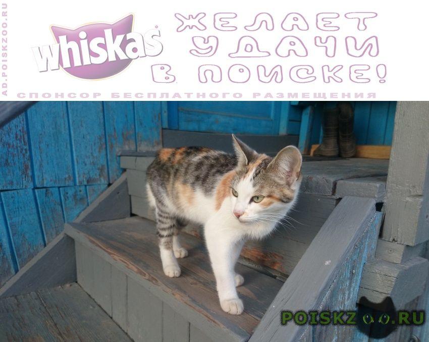 Найдена кошка г.Одинцово