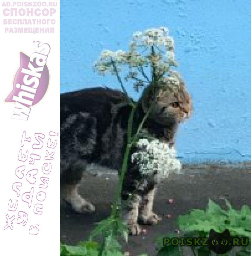 Найдена кошка южное бутово   кошечка г.Москва