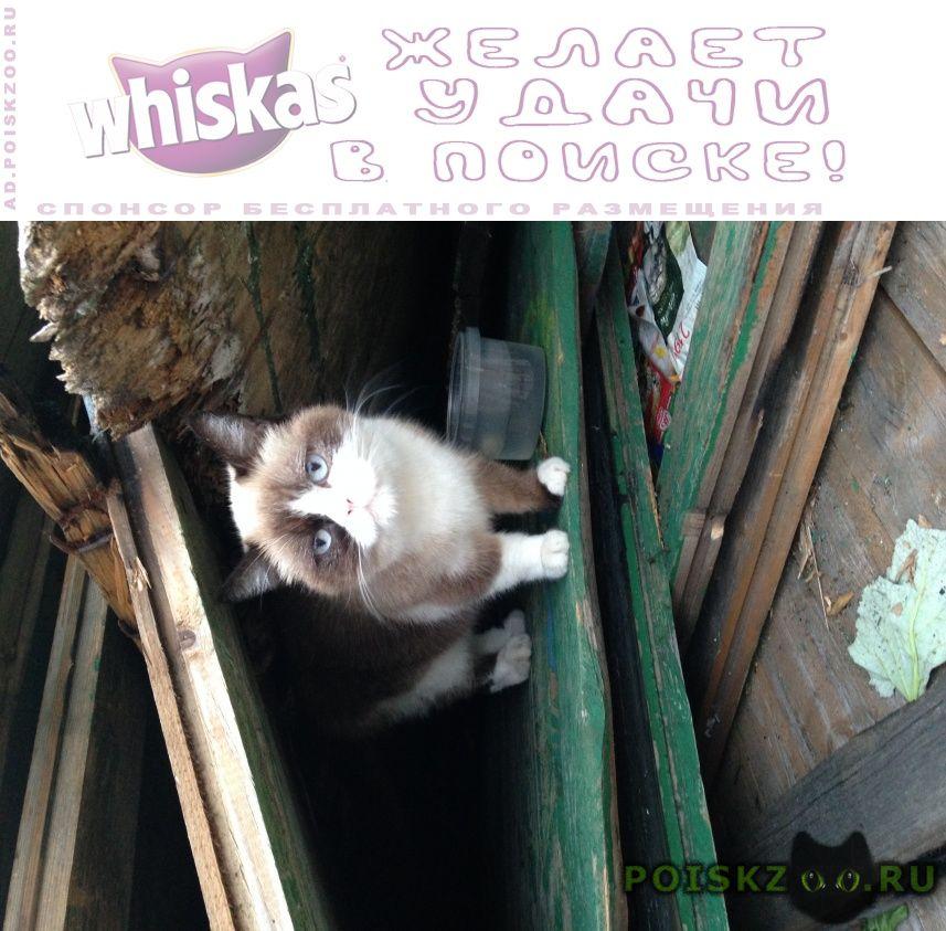 Найдена кошка в районе м. динамо г.Москва