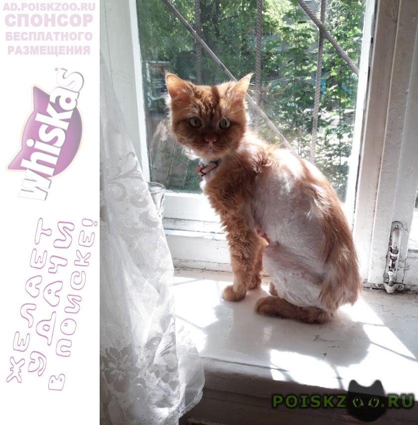 Найден кот рыжий г.Воронеж