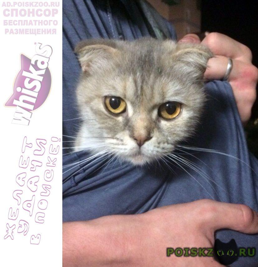 Найдена кошка г.Белгород