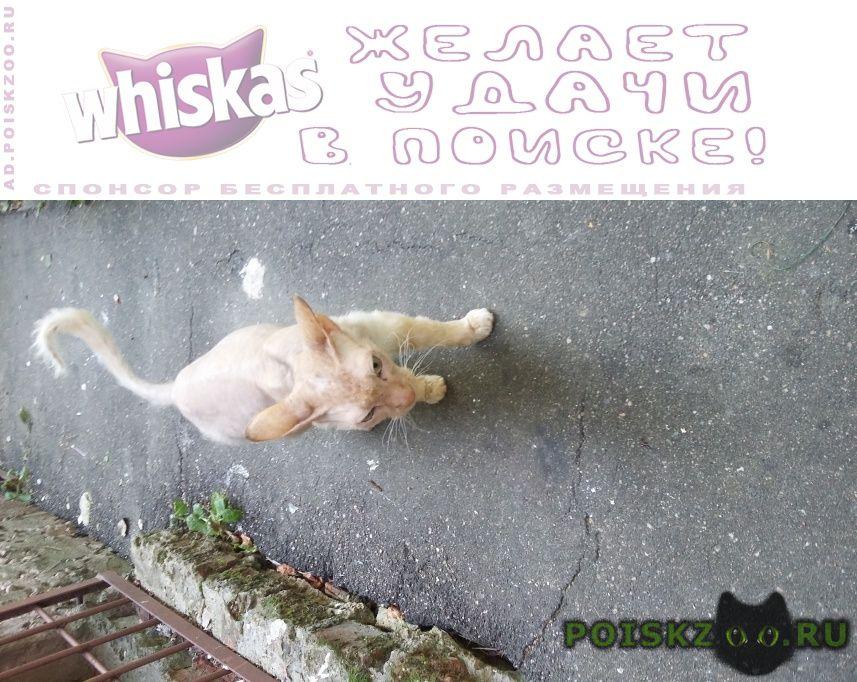 Найдена кошка сфинкс г.Смоленск
