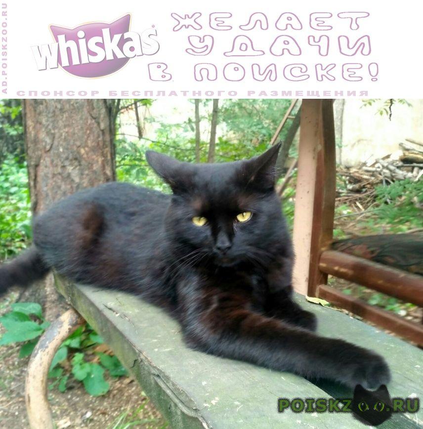 Найден кот , жулебино г.Москва