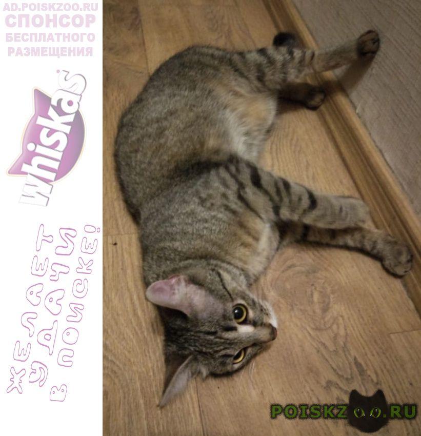 Найдена кошка в районе метро тульская г.Москва