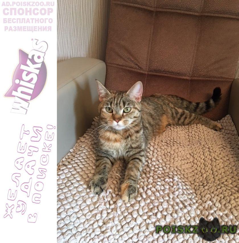 Найдена кошка трехцветная полосатая г.Екатеринбург